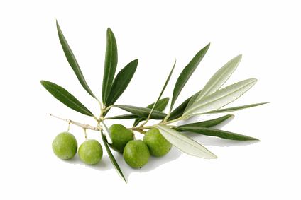 Qrmsogaf olivier mickyso fotolia com s